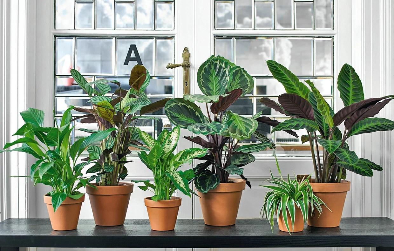 Le piante antismog  CASAfacile