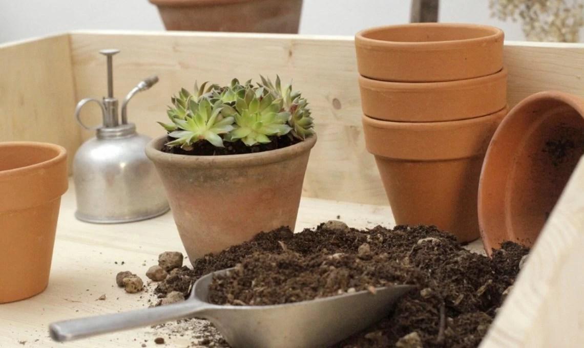 Costruire un piano di lavoro per il tuo giardinaggio  CASAfacile