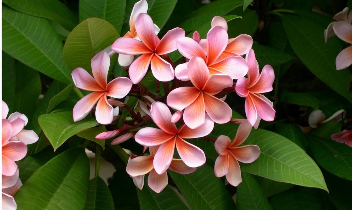 Piante dai fiori profumati  CasaFacile