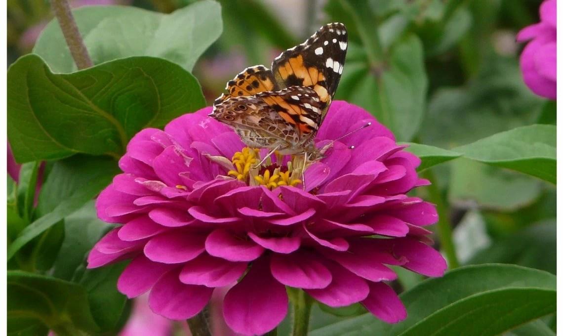 Piante che fioriscono in estate  CasaFacile
