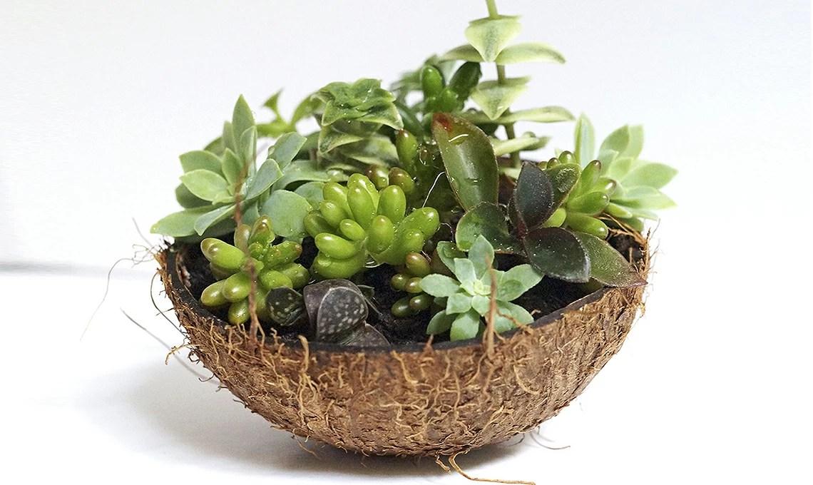 Contenitori creativi per piante grasse  CASAfacile