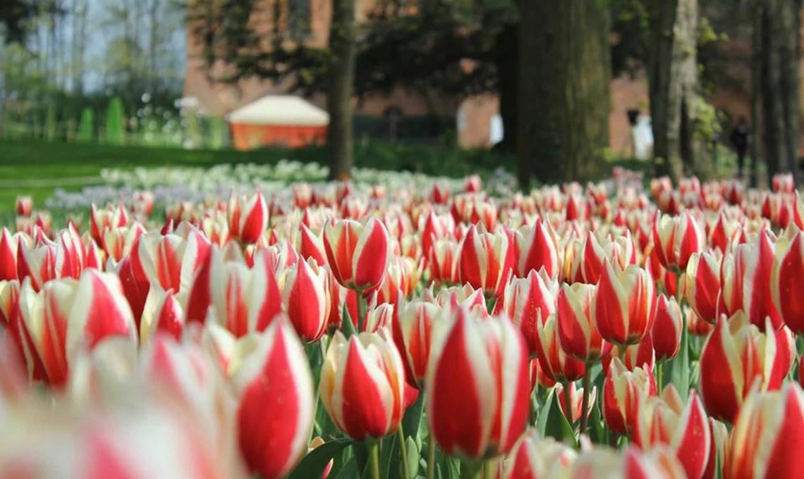 90000 tulipani in fiore al castello di Pralormo  CASAfacile