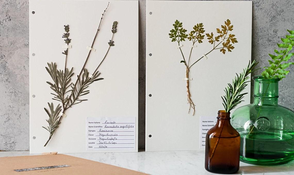 Stile botanical crea un Erbario a libro  CASAfacile