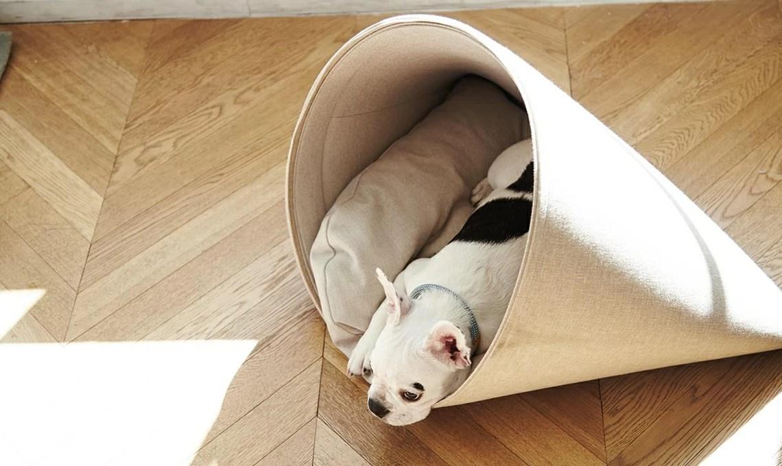 Design E Comfort In 10 Letti Per Cani Casafacile