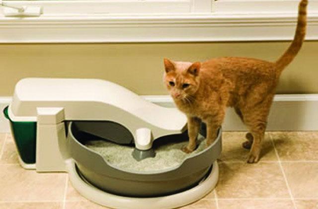 La lettiera per gatti che si autopulisce
