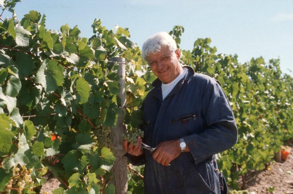Mr C in the vineyards, Casa Larga Vineyards