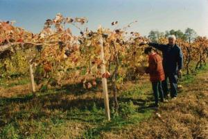 Mr and Mrs C in the vineyards, Casa Larga Vineyards