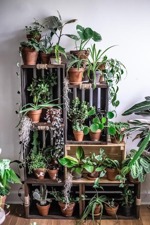 cassette porta piante