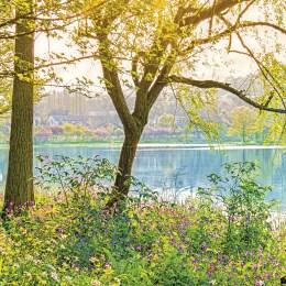 8-524 Spring Lake
