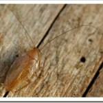 estate tempo di … scarafaggi!
