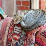 Come riposare bene: 10 consigli per dormire come un ghiro