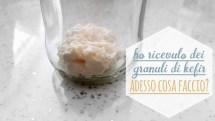 kefir di latte: cosa fare quando ti arrivano i granuli a casa