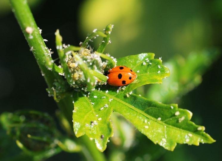 Malattie delle piante  Malattie piante  I rimedi per le malattie delle tue piante