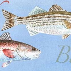 Casart coverings Element: Redfish & Bass no. 9 – Gulf Coast Design water & wording_4