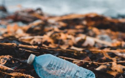 ¿Por qué no reutilizar botellas de plástico?