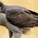 Turismo ornitológico y avistamiento de aves en Asturias