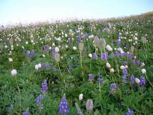 Meadow hillside