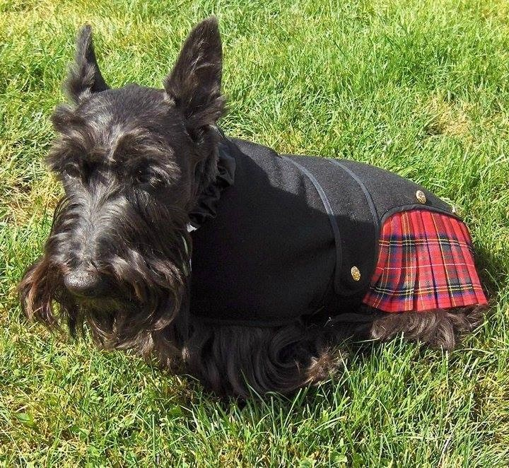 Tell Me About Scottish Terriers!