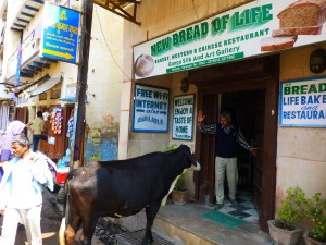 """This cow was waiting for the bakery to open, but the shopkeeper strong enforced the """"No shoes, no shirt, no service"""" rule"""