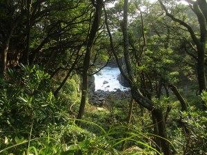 A view of the Sagami-Nada Sea through the trees of the coastal hiking path