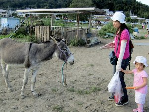 """The girl has a """"you're kidding me, right?"""" look about feeding her carrot to the donkey."""