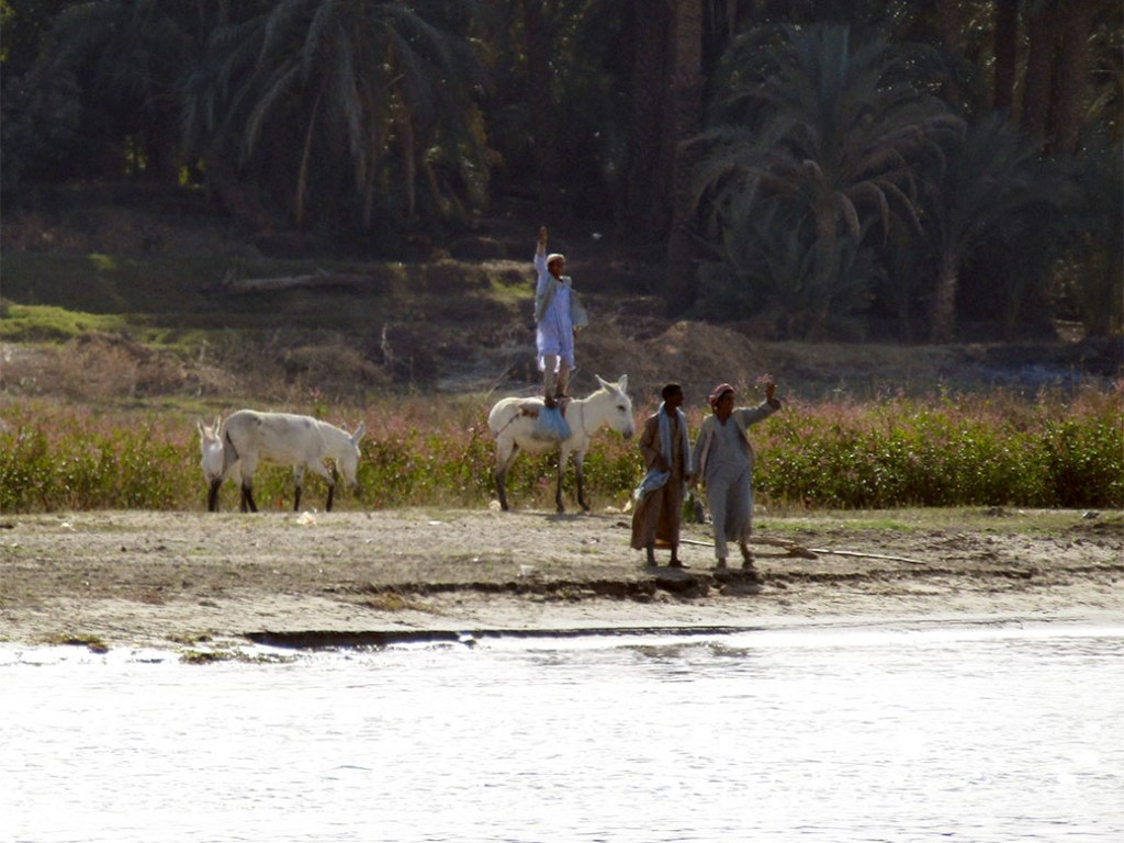 Daily life along the Nile River. The man flat-foot jumped atop his donkey to wave at our boat.
