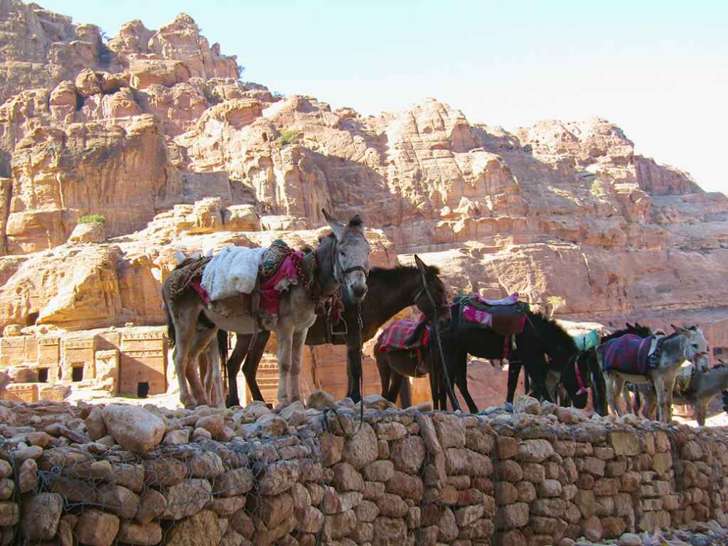 The real workers at Petra, donkeys and mules take a break in the shade near the Street of Facades.