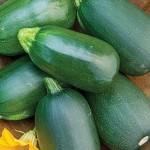 Squash - Green Eggs