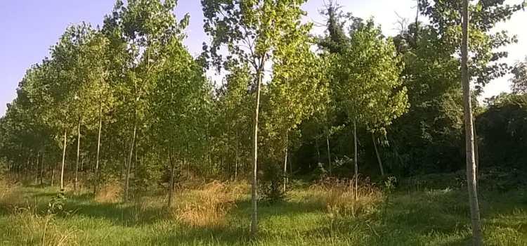 7 luglio passeggiata naturalistica con esperto botanico
