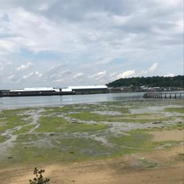 WR algae forestcity cemetery
