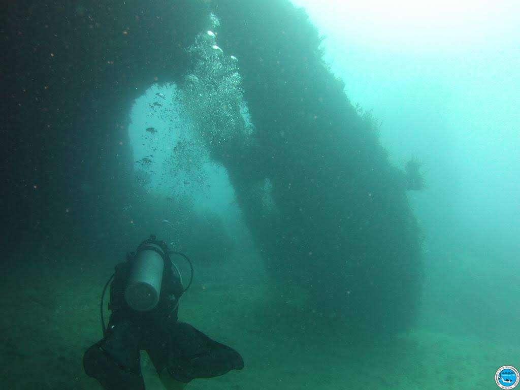 Viajando a bucear en las aguas brasileiras 30