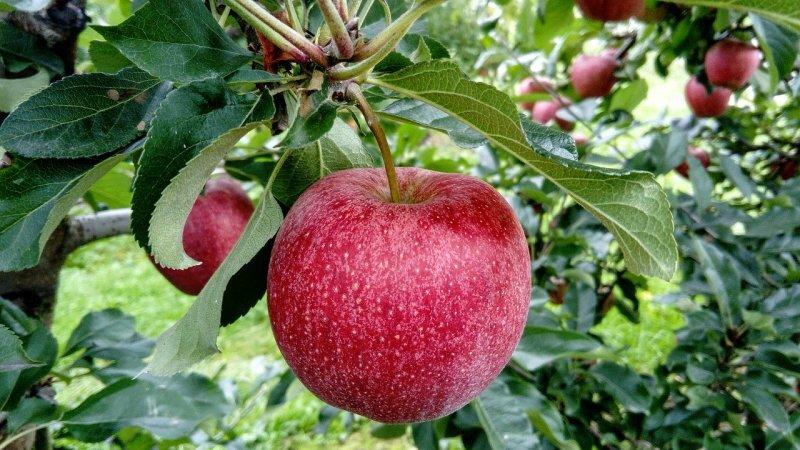 Mit Äpfeln zahlen