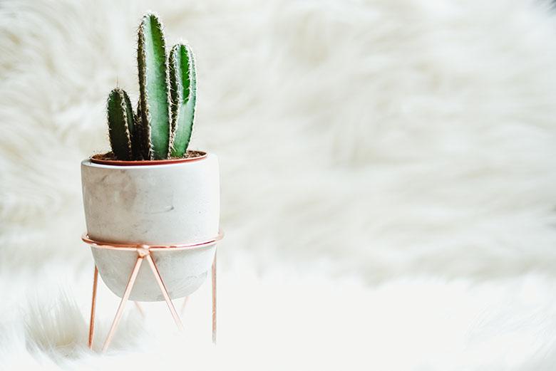 Cute Cactus Wallpaper Macbook Compras Decora 231 227 O Em Cobre E Rose Gold Casinha Arrumada