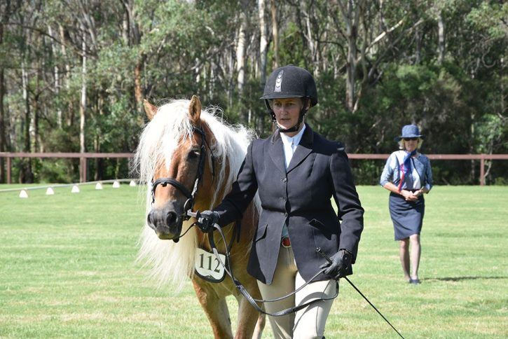 An Australian thoroughbred on display