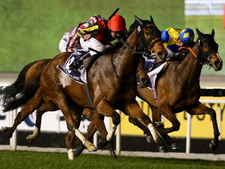 Thoroughbred horses ready for the Chinese market