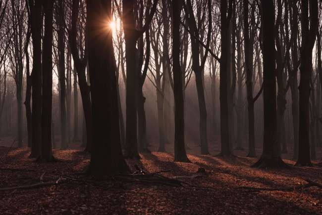 forest with light shinning through trees