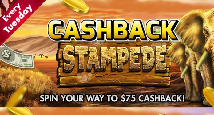 It's Cashback Stampede Tuesday When You Play CyberSpins Casino
