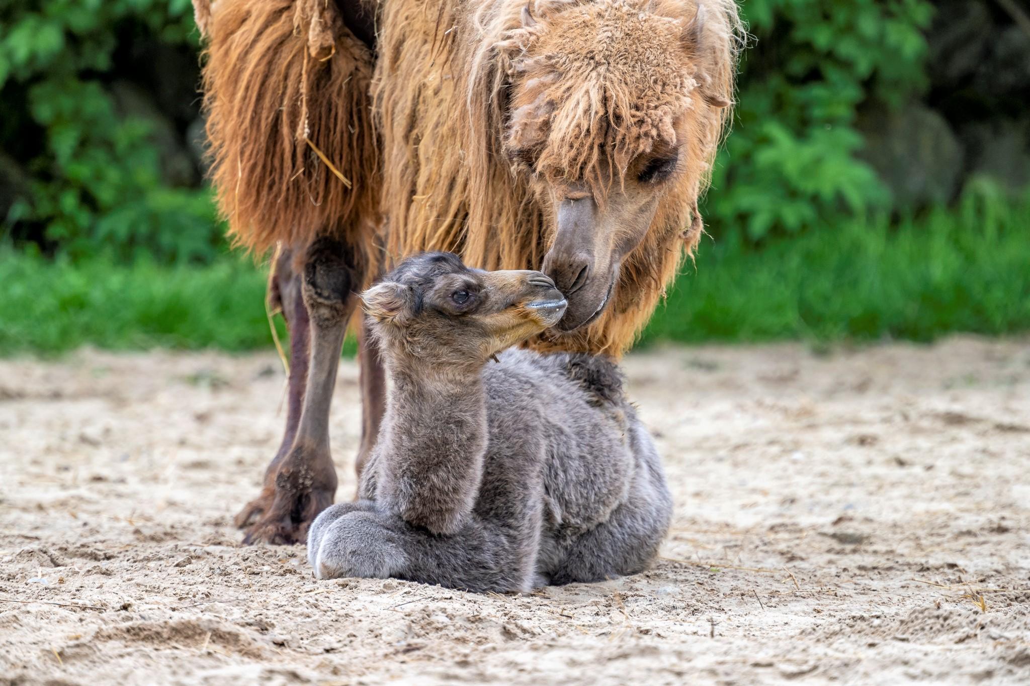 Najnovší prírastok v rodine Zoo Bratislava menom Celestína