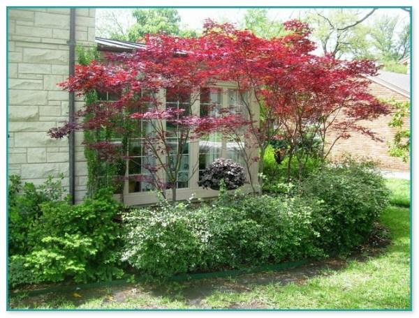 dwarf ornamental trees landscaping