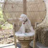 Thrift Score Thursday- Wicker Peacock Chair
