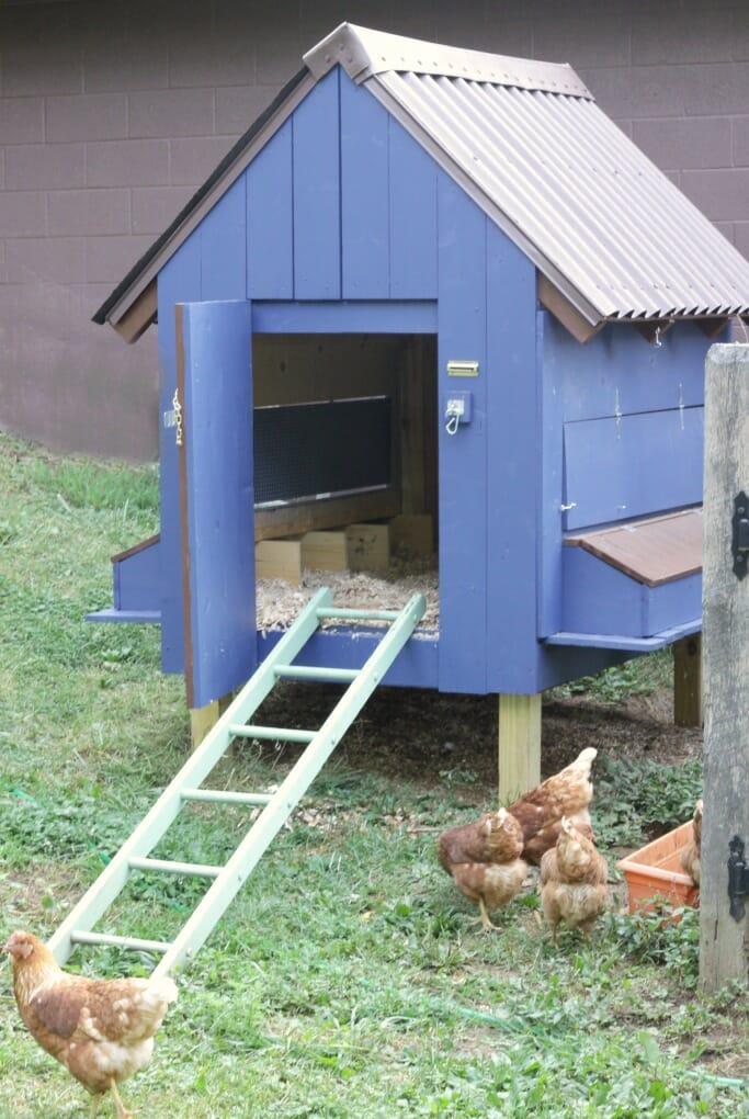 our painted chicken coop featuring clark kensington cassie bustamante