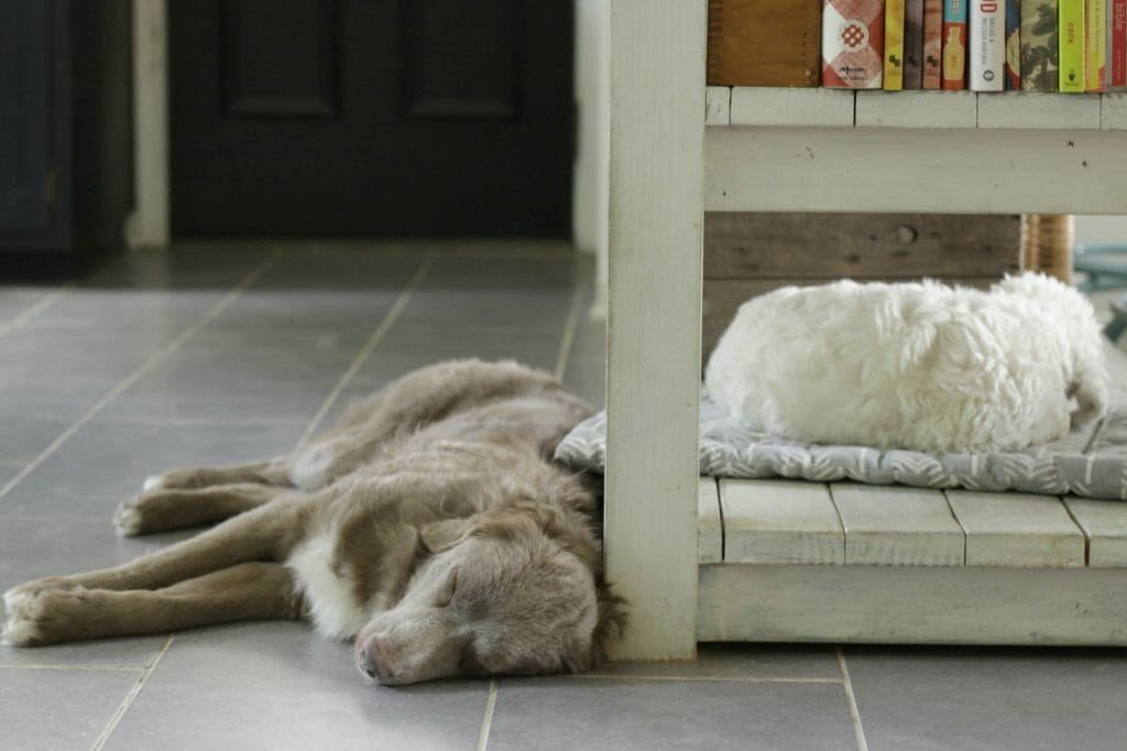 dogs-sleeping-in-kitchen