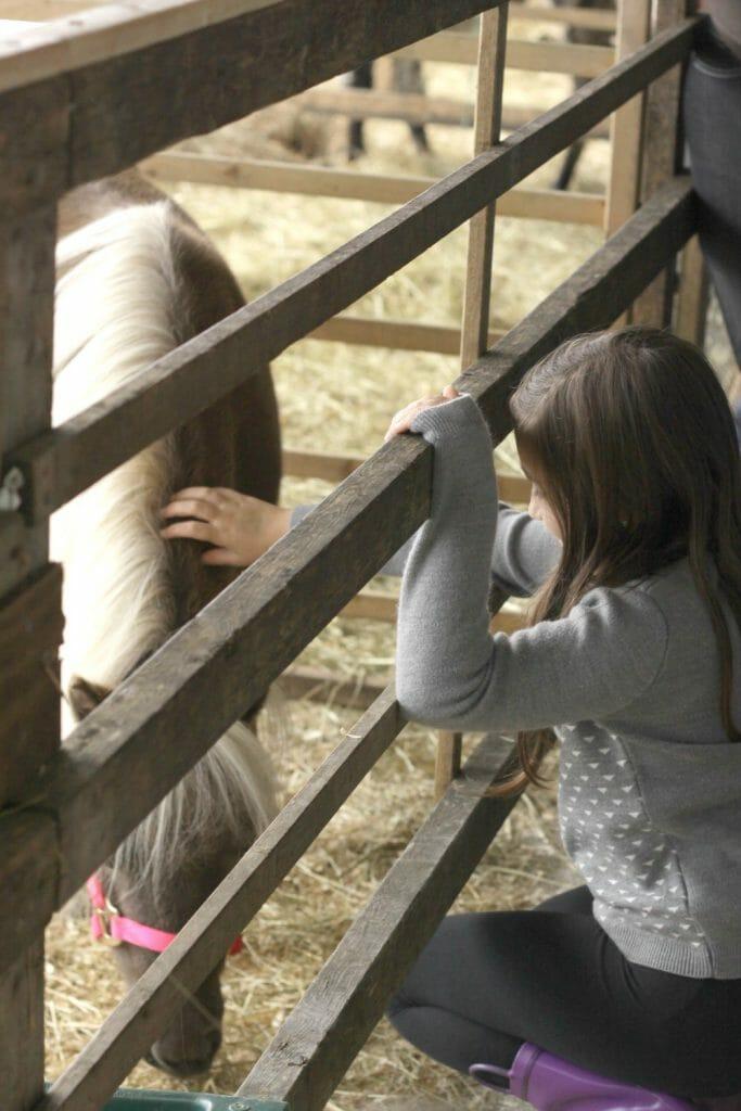 Emmy petting horse