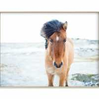 Horse Photo Print in the Dining Room
