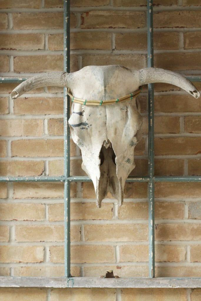 Boho Bull Skull