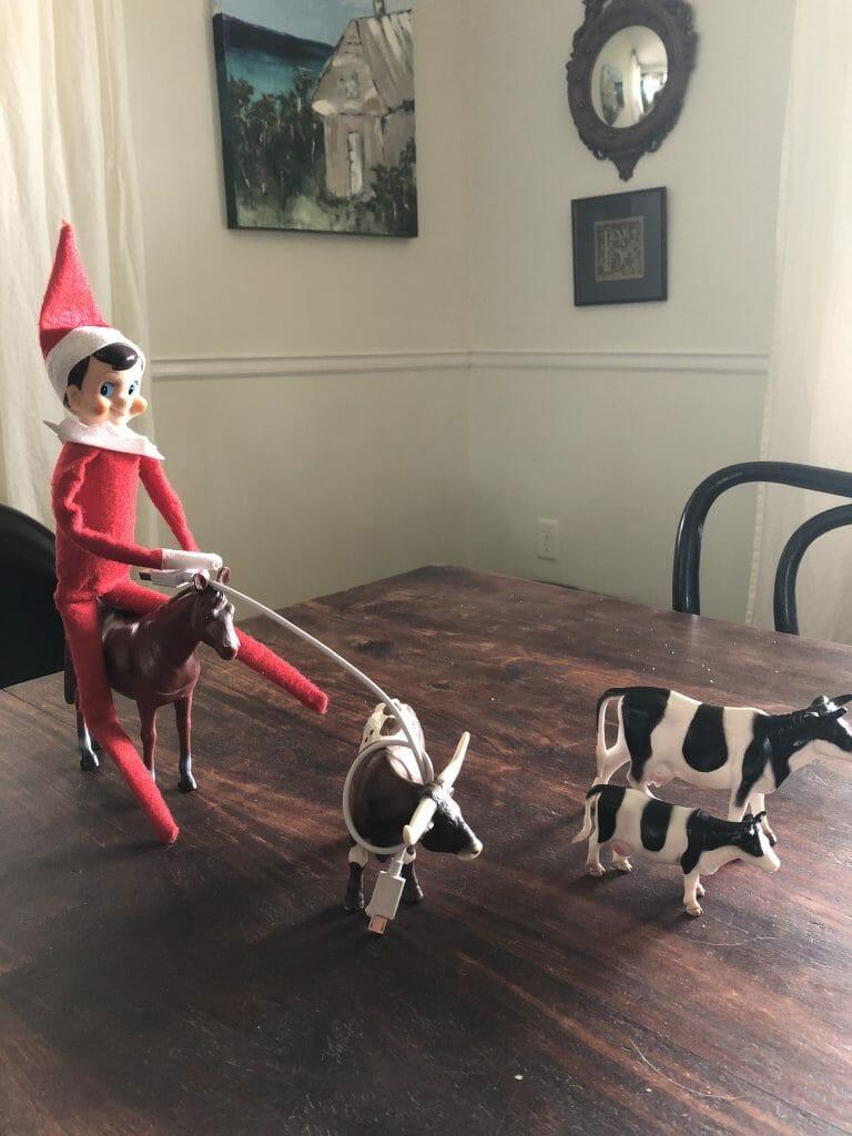 Elf rodeo