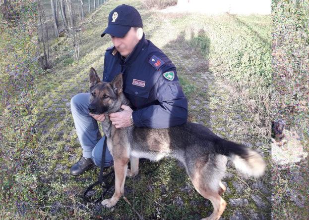 Cane poliziotto fiuta droga