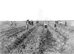 chinese-farm-scenario