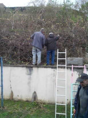 societe_horticulture_de_rive_de_gier_kiwi_1