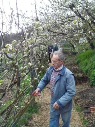 societe_horticulture_de_rive_de_gier_taille_pommier_2